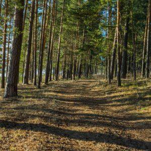 Поселок Арти. Дорога от лагеря.